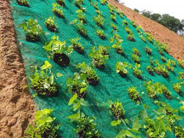 re vegetation method reclamation